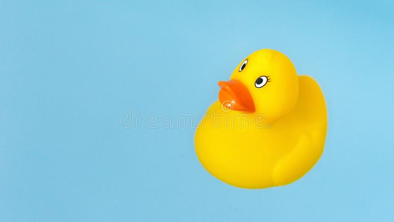 Yellow rubber bath duck in blue water royalty free stock images
