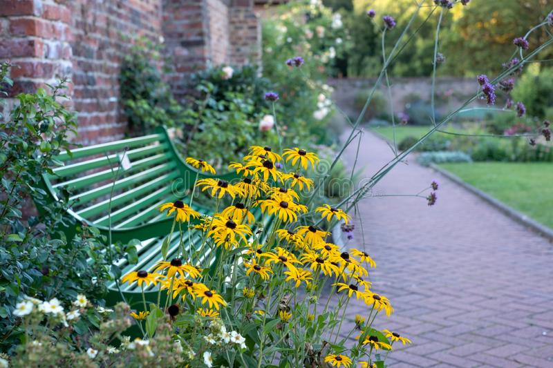 Yellow rudbeckia flowers in front of green garden bench at Eastcote House historic walled garden in Hillingdon, London UK royalty free stock image
