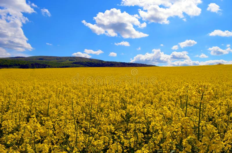 Yellow sea stock images