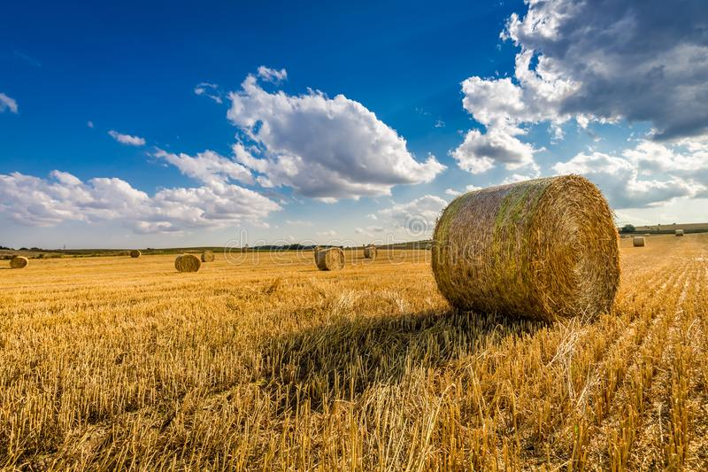 Yellow sheaf of hay on the field and blue sky stock photos