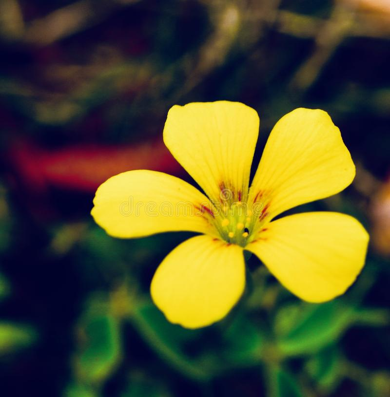 Yellow Simplicity royalty free stock images