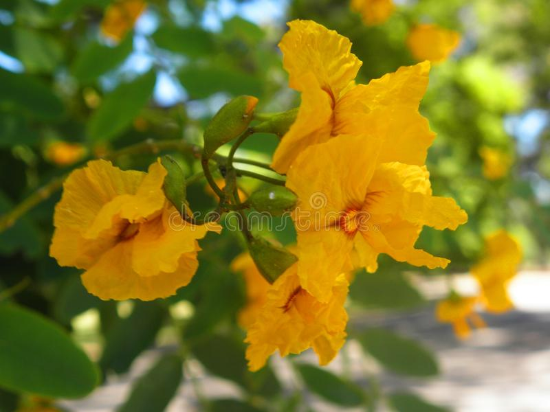 Yellow soft flowers in a park stock photos