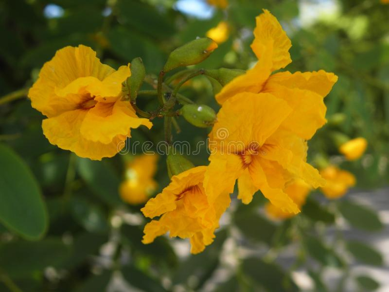 Yellow soft flowers in a park royalty free stock photos