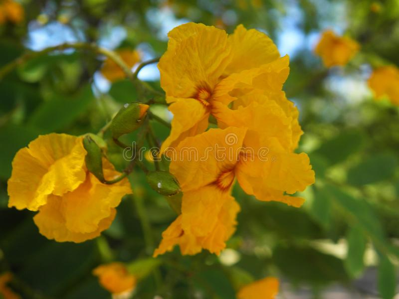 Yellow soft flowers in a park royalty free stock photo