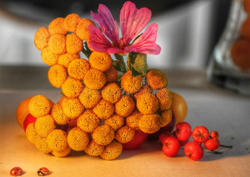 Yellow specie and flowers royalty free stock images