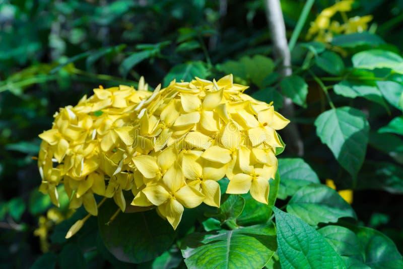 Yellow spike flower stock image