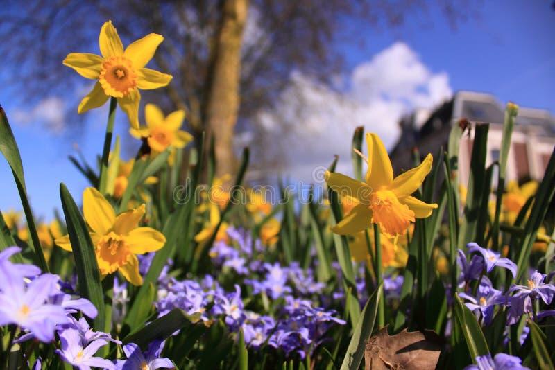 Download Yellow spring flowers stock photo. Image of habitat, spring - 14300672