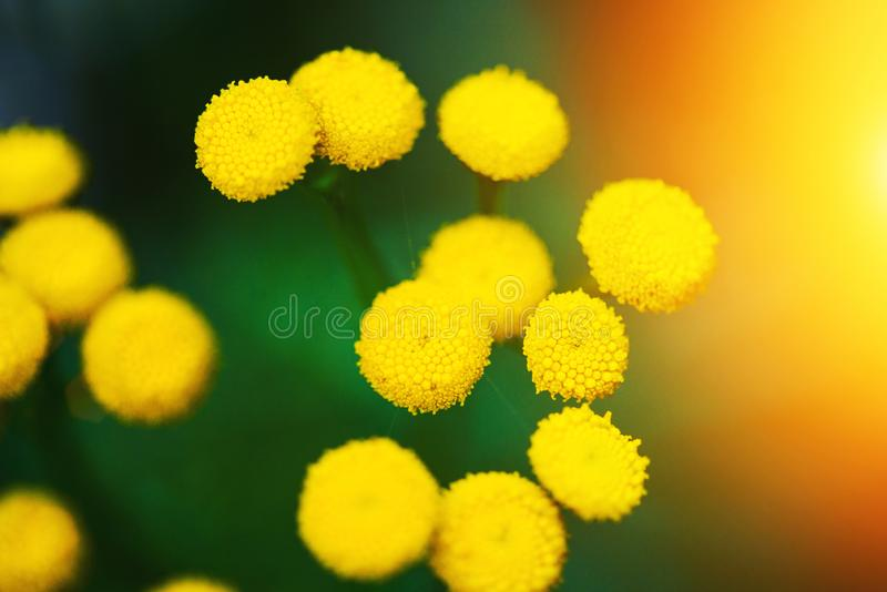 yellow spring flowers over green background stock images