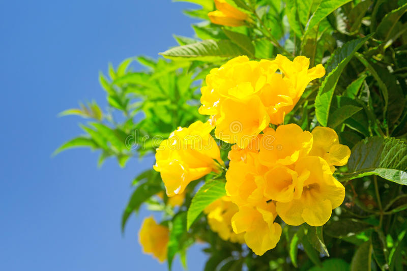 Download Yellow spring flowers stock photo. Image of agriculture - 30835610