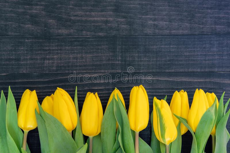 Yellow tulips on the dark wooden background with copy space stock images