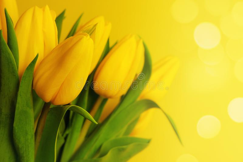 Yellow tulips bouquet on the yellow background with bokeh and copy space stock photography