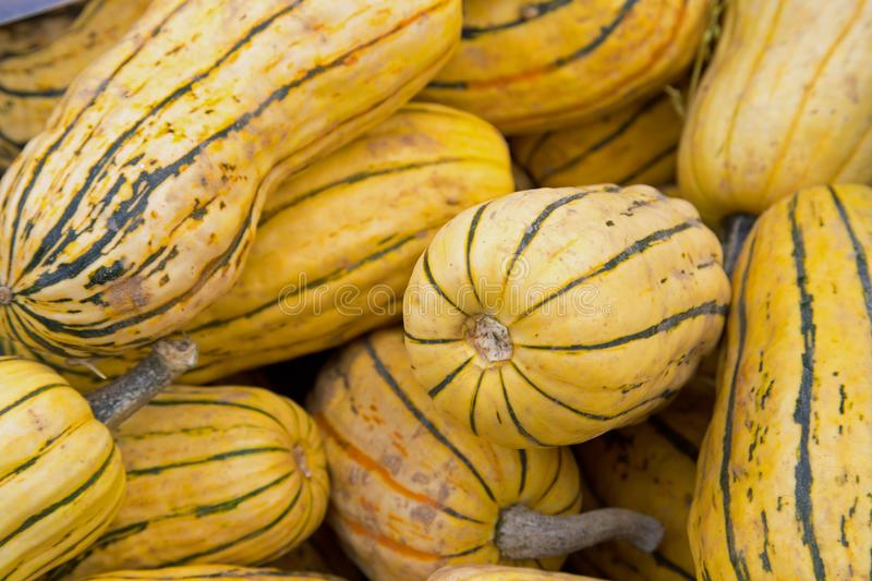 Yellow squashes on a market stall. A market stall selling squashes- seen close up so it fills the frame royalty free stock photos