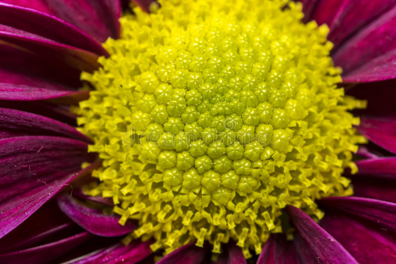 Yellow stamen on purple flower stock photo image of blooming download yellow stamen on purple flower stock photo image of blooming meadow 94287138 mightylinksfo