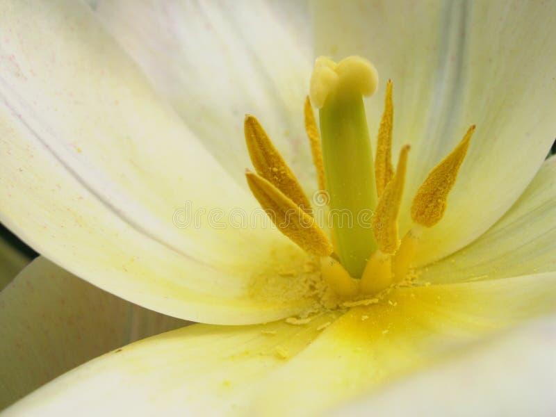 Yellow stamen white petals stock photos