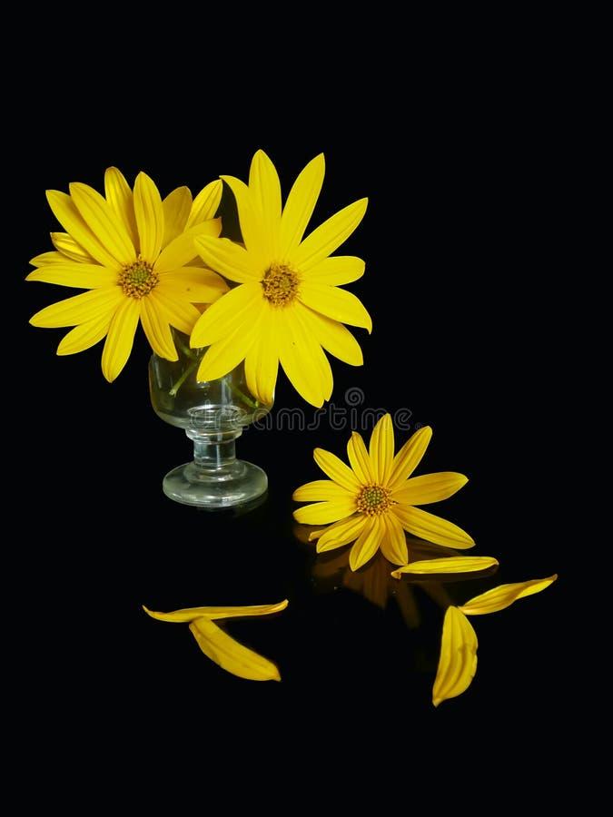 Yellow still-life stock photos