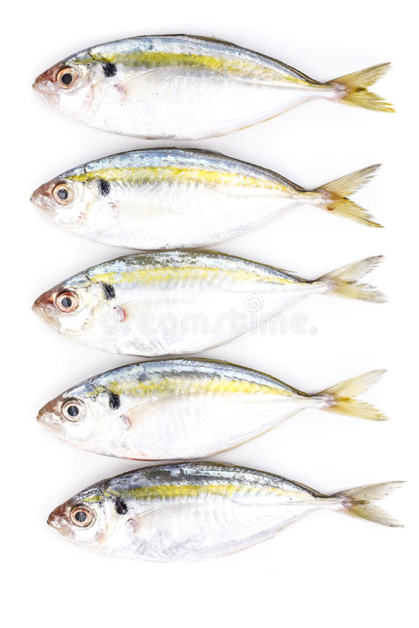 Yellow stripe trevally fish. On white background stock photography