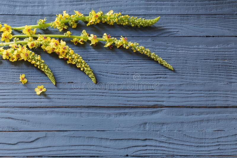yellow flowers on blue wooden background stock photos