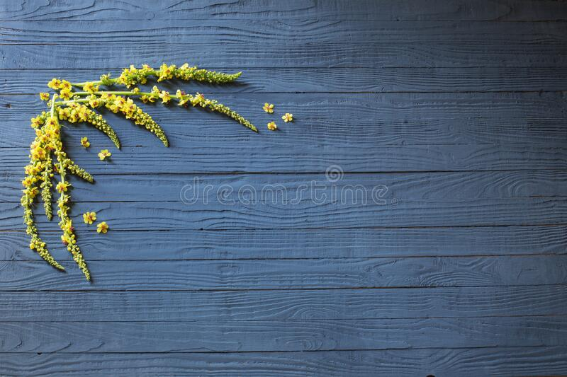 yellow flowers on blue wooden background stock photography