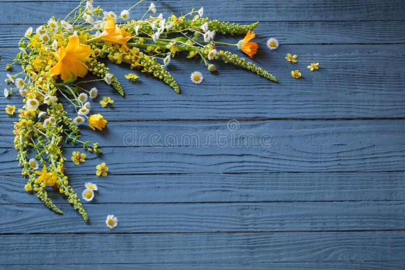 yellow flowers on blue wooden background stock images