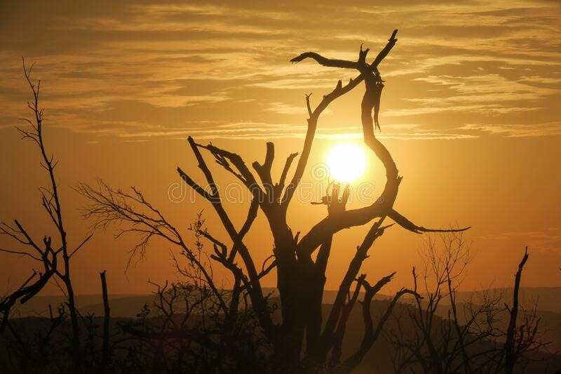 Yellow sun caught in silhouette of tree branches during sunset. Location Baringo Lake in Kenya stock photography