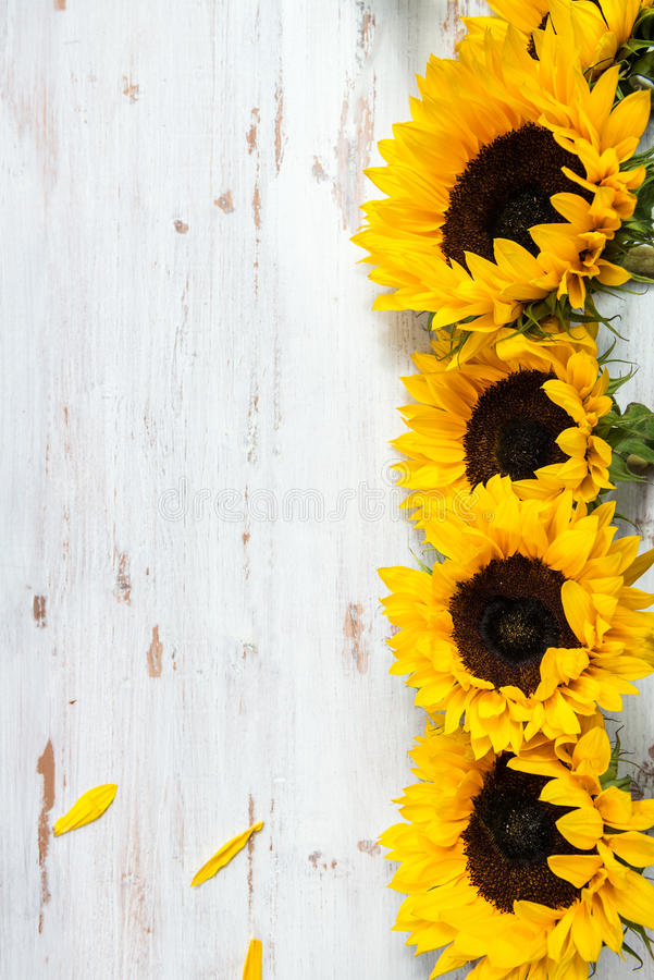 Yellow Sunflower Bouquet on White Rustic Background. Autumn Concept, Top View, Space for Text royalty free stock photography