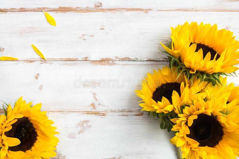 Yellow Sunflower Bouquet on White Rustic Background. Autumn Concept, Top View, Space for Text stock image