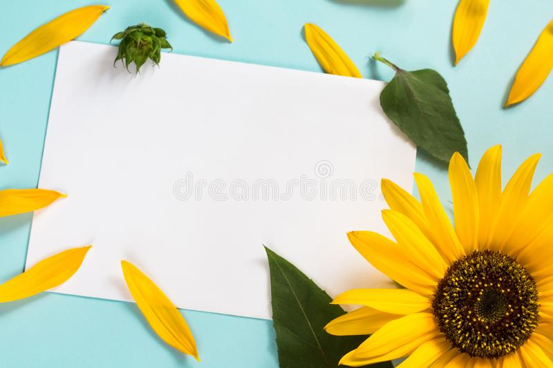 Yellow sunflower, petals and leaves on light blue background with blank white card. Floral composition, flat lay, top view,. Yellow sunflower on bright blue royalty free stock photos