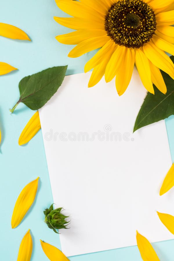 Yellow sunflower, petals and leaves on light blue background with blank white card. Floral composition, flat lay, top view,. Minimal romantic style stock photo