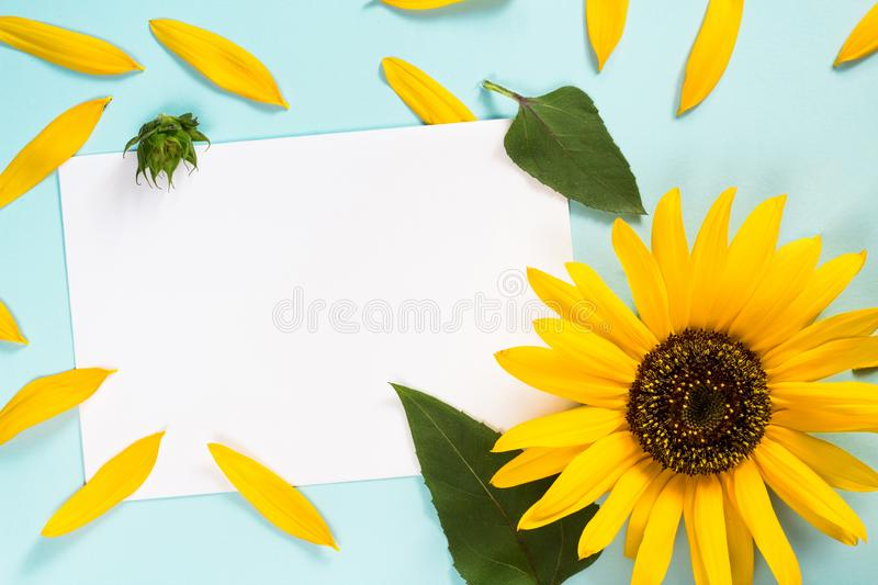 Yellow sunflower, petals and leaves on light blue background with blank white card. Floral composition, flat lay, top view,. Minimal romantic style. Message royalty free stock photography