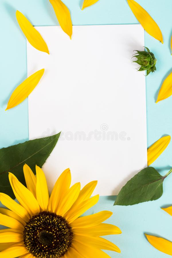 Yellow sunflower, petals and leaves on light blue background with blank white card. Floral composition, flat lay, top view,. Minimal romantic style royalty free stock photography