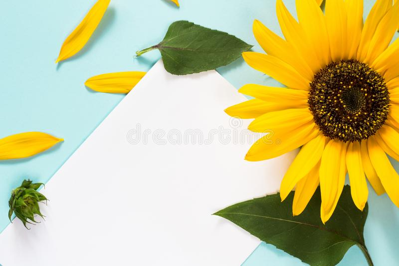 Yellow sunflower, petals and leaves on light blue background with blank white card. Floral composition, flat lay, top view,. Minimal romantic style stock images