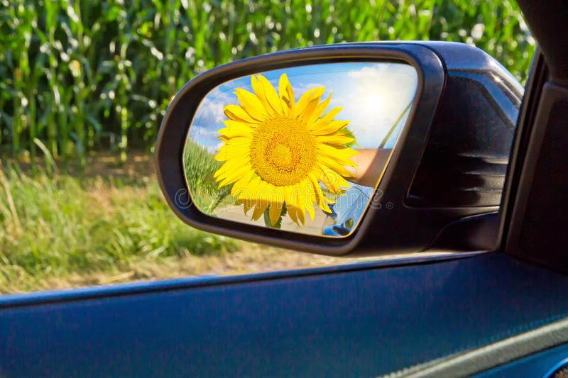 Yellow sunflower in side mirror. Yellow sunflower in a side mirror of a modern car royalty free stock image
