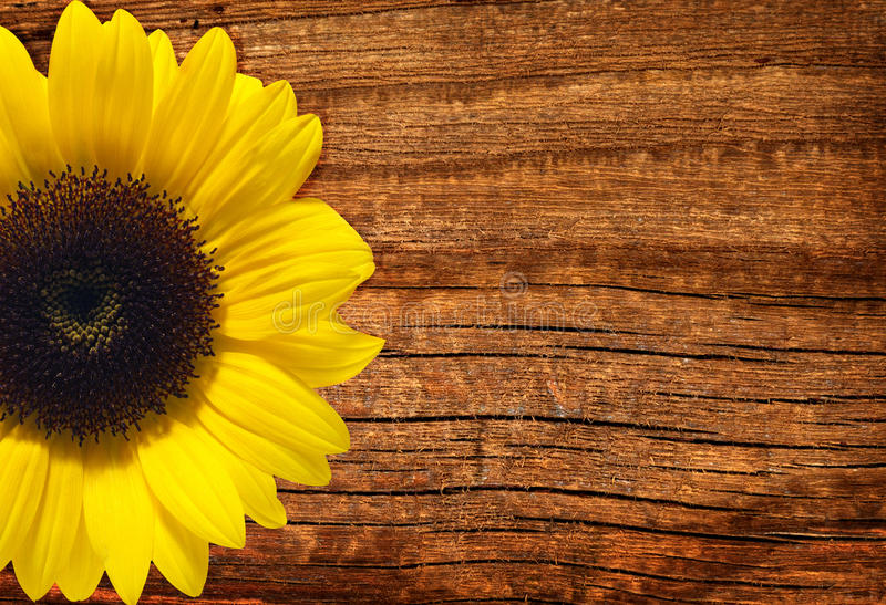 Download Yellow Sunflower On Wooden Background Stock Image