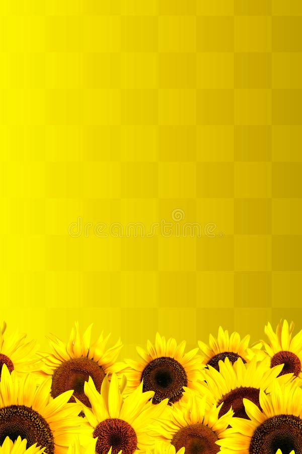 Yellow sunflowers petals background royalty free stock image