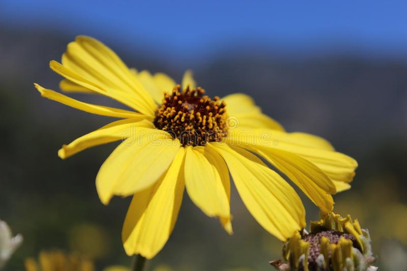 Yellow sunny stock images