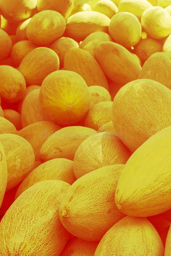 Yellow sweet melons. Cantaloupe melons for sale in organic farm. Toned image. Different group of fresh ripe yellow sweet melons. Cantaloupe melons for sale in stock photo