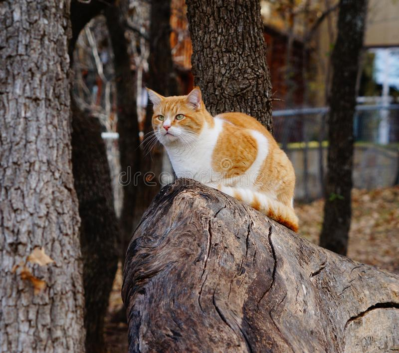 A yellow tabby cat sitting on a log stock images