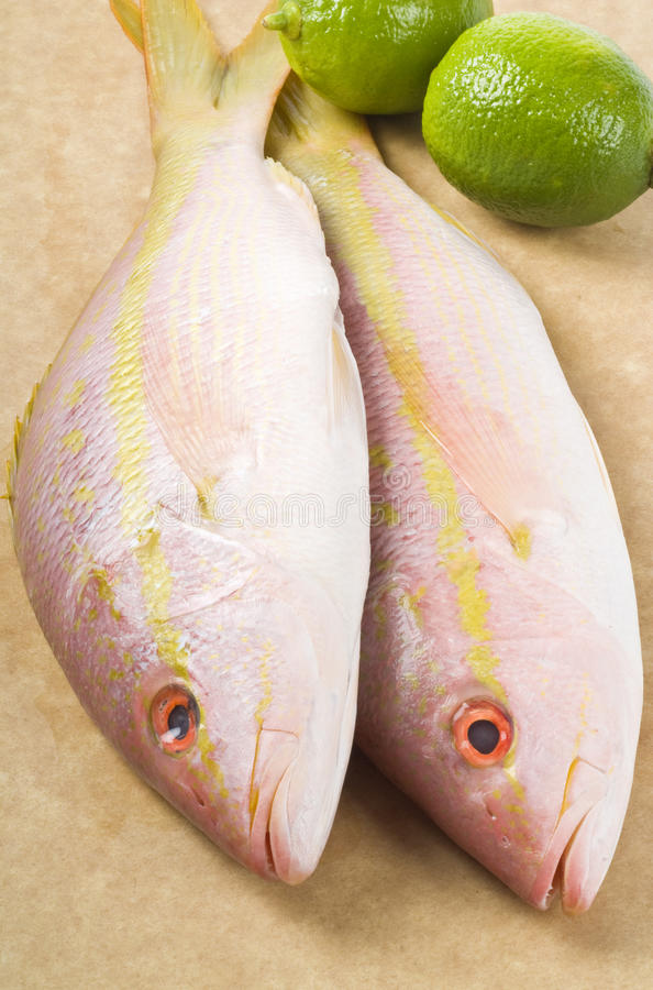 Free Yellow Tail Snappers And Limes Royalty Free Stock Photography - 18139707