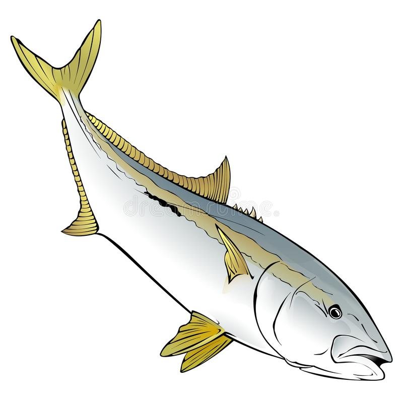 Yellow Tail Vector Illustration stock photography