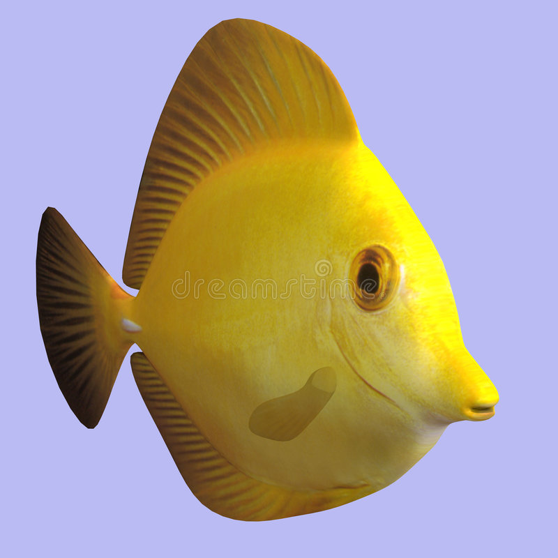 Yellow Tang. Fish in water With Clipping Path royalty free illustration