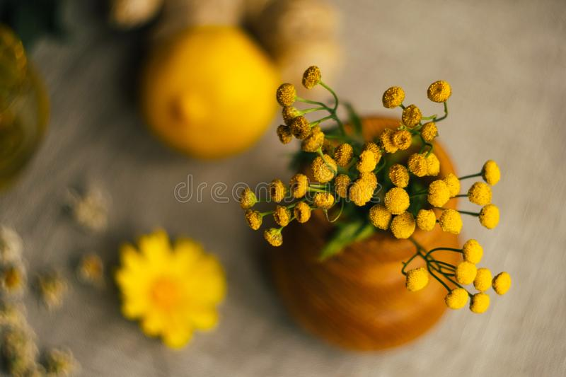 Yellow tansy flowers in wooden vase at the table with blurred lemon, ginger, chamomile flowers and herbs at linen fabric stock image