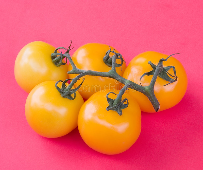 Download Yellow Tomatoes Stock Photo - Image: 1090620