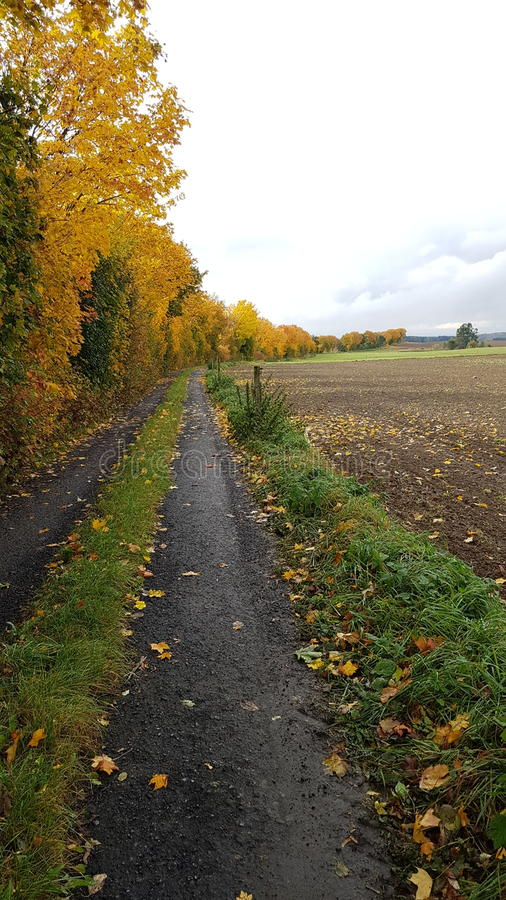 Yellow tree allee. In east germany royalty free stock photo
