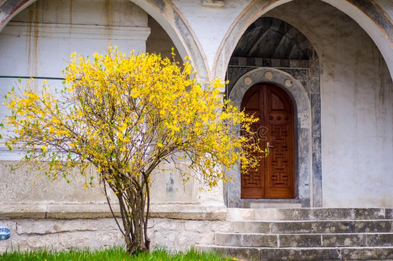 Yellow tree in Khan Palace. Beautiful place. Inscription day. Old town royalty free stock image