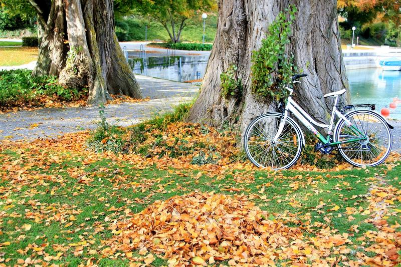Yellow, Tree, Road Bicycle, Leaf stock images