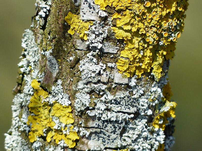 Yellow, Tree, Trunk stock photography