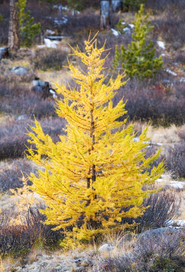 Download Yellow Trees Stock Photos - Image: 12105223