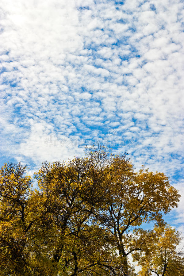 Download Yellow trees in the autumn stock photo. Image of brightly - 16196338