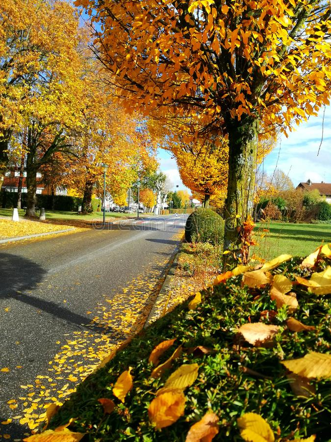 Yellow trees on the street stock photo