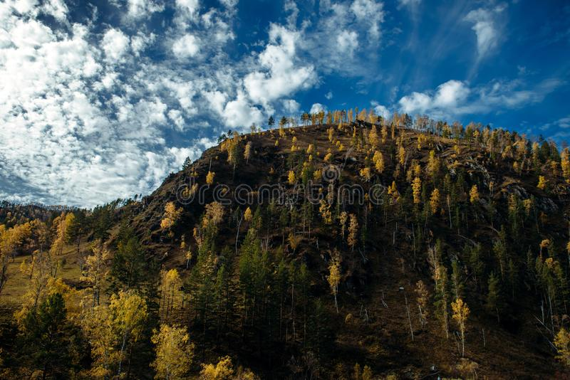 Yellow trees in sunlight on the mountainside. Beautiful autumn day in the mountains, dramatic  and picturesque. Yellow trees in sunlight on the mountainside stock photography